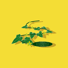 paper sticker on stylish background plant Cucumis
