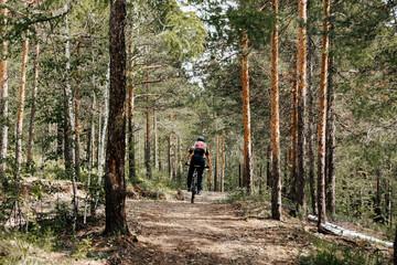 back man cyclist mountain biking on forest pine