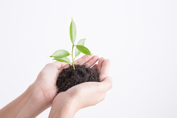 Hands holding seedling on white background,Ecology concept Wall mural