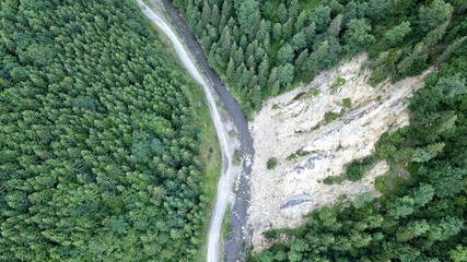 Top view of the pines and the road