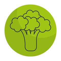 broccoli fresh isolated icon vector illustration design