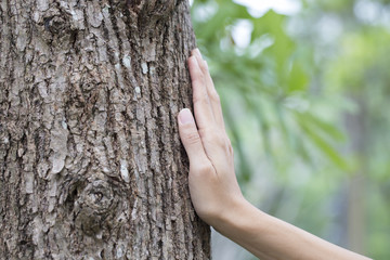woman hand touching tree trunk, save environment concept