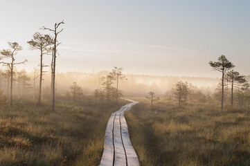Sunrise Bog & Fog (Hiking)