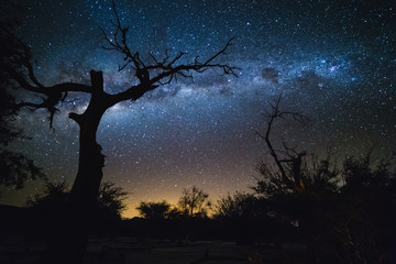 Silhouette of dry tree and Milky Way. Galaxy at the night sky. Fototapete