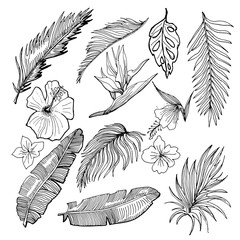 Hand Drawn Vector Tropical Set. Banana And Palm Leaves And Tropical Flowers.  Contour Drawing. Black And White Illustration.