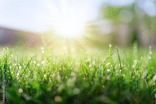 Wall mural Grass field in sunny morning