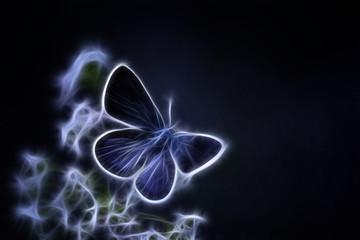 Argus-bleu Fractalius