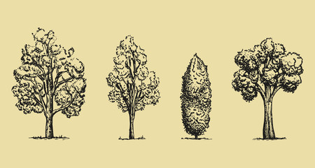trees hand-drawing set. Vector sketches