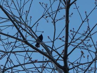 Blue sky small bird tree concept spring