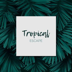 Dark green minimalistic vector design with exotic royal palm leaves.