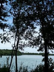 Lake Between Trees