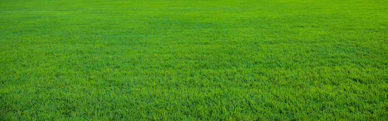 Fotobehang Weide, Moeras Background of beautiful green grass pattern