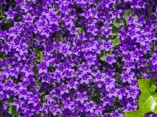 Garden flowers, Basel, Switzerland