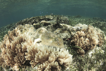 Coral bleaching. Coral dies due to global warming and climate change