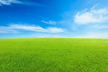 Aluminium Prints Grass green grass under the blue sky