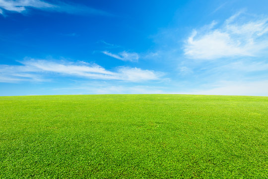 green grass under the blue sky