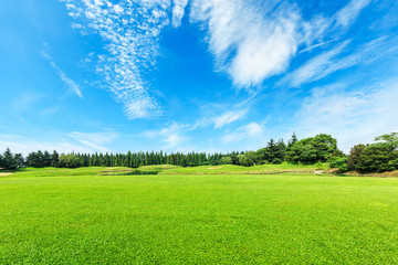 Canvas Prints Blue Green field and blue sky