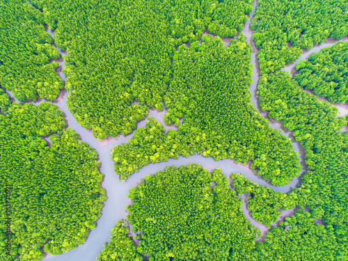 Top View Tree And River Beautiful Background Aerial Mangrove Forest Natural