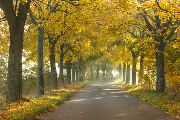 Canvas Prints Autumn Autumn road / North Poland