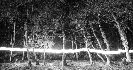 Forest with lightpainting