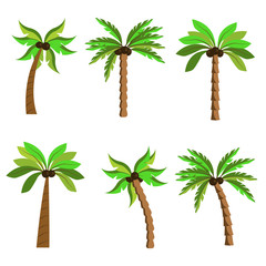 Palms on a white background