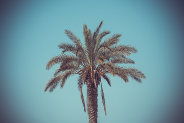 Palm trees against the blue sky as wallpaper, backdrop or beautiful background.