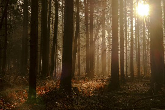Autumn sunlight in the woods.