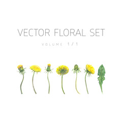 Bright watercolor floral vector set