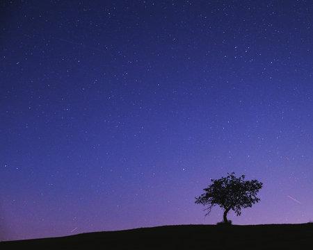 Apple tree on stary night.
