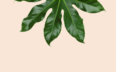 green leaves over beige background