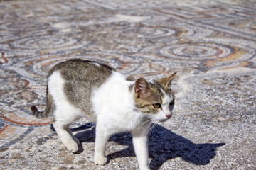 Ephesus Temple Cat 2