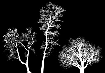 small three bare isolated tree white silhouettes