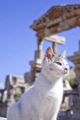 Ephesus Temple Cat