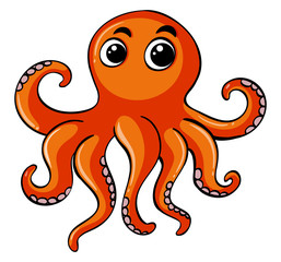 Orange octopus on white background