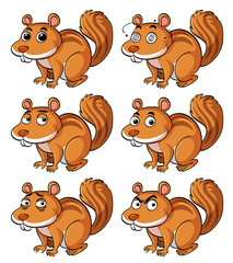 Brown squirrel with different facial expressions