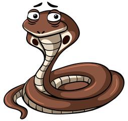 King cobra snake on white background