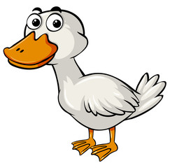 Cute duck on white background