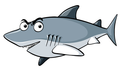 Gray shark on white background