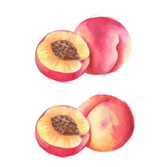 Hand-drawn watercolor illustration of juicy ripe peaches. Sliced fruits isolated on the white background. Summer healthy food drawing