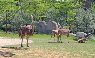 Zoo de Paris Vincennes