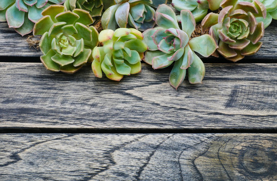Top view cute succulent plant with copy space for text on wooden table background.