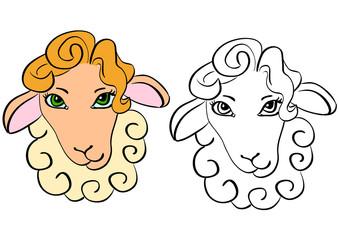 Sheep head - contour