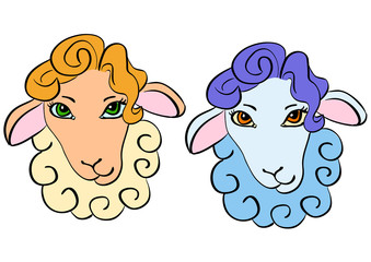 Sheep head - warm and cold