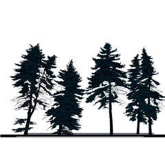silhouette of pine tree, vector isolated on white
