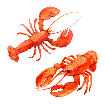Lobsters isolated on white background, watercolor illustration