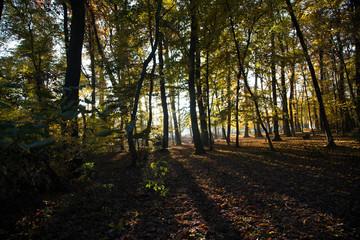 Lever du jour en forêt