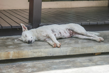 white dog sleeping on the cement stair.