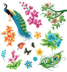 Set of tropical plants and birds.