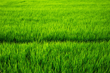 Field texture, Field background