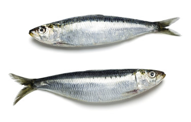 Two Fresh Whole Sardines, Sustainable Seafood, on a White Background